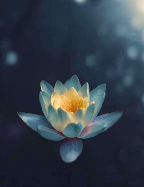 Sangha Hot Yoga Beautiful Yoga Lotus Flower